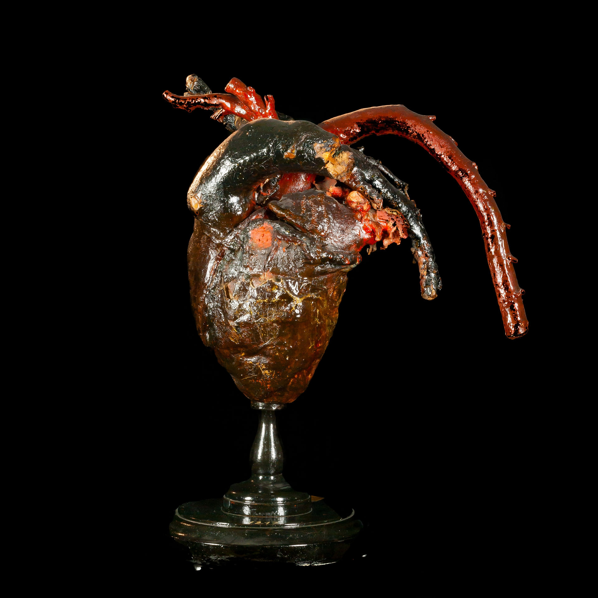 Equine heart